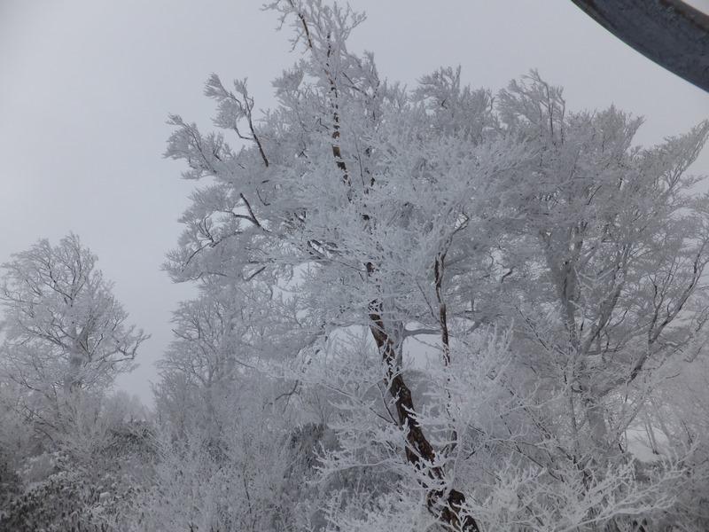 FrostCoveredTrees_20170211_2.jpg