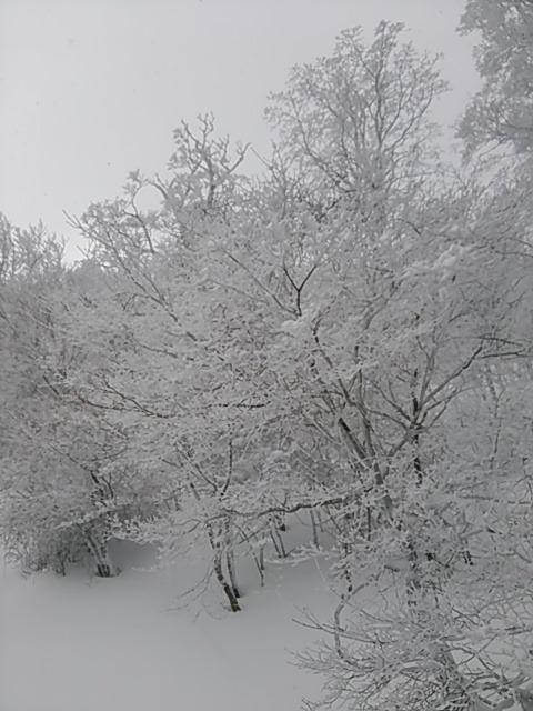 FrostCoveredTrees_20170211_4.jpg