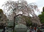上野恩賜公園 No.1