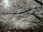 上野恩賜公園 No.2